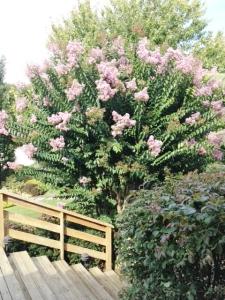 Corey tree
