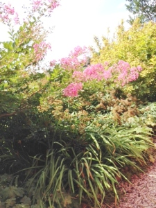 Flowers line the garden