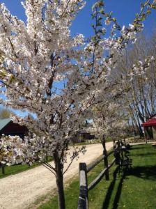 mc tree bloom