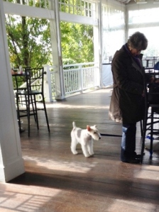 Patient pooch on the porch