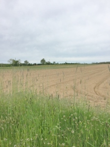 Typical scene along Oregon Road--plowed field ready for planting!