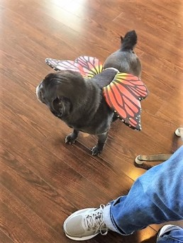 Beasley sporting his monarch butterfly wings.